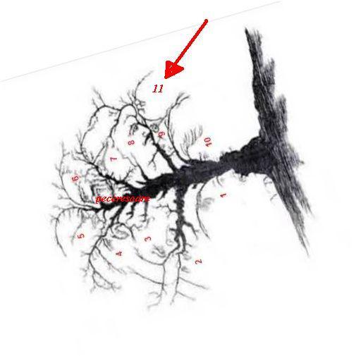 Sunt 10 chipuri în acest copac ? Da ( 10 + 1 )